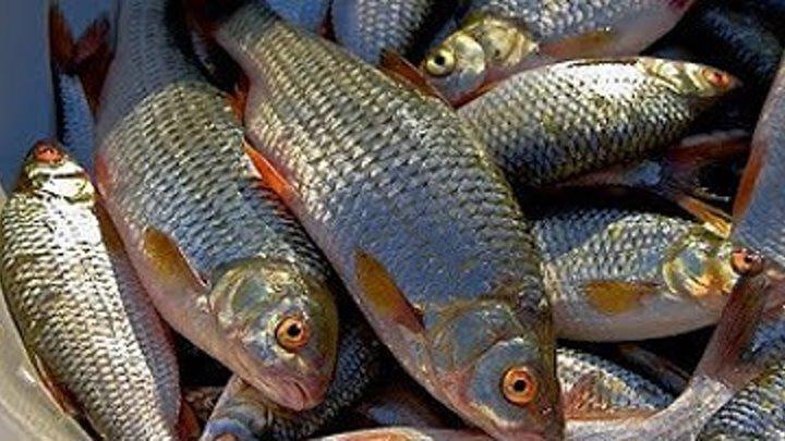 Рыбалка на Истринском водохранилище. д. Трусово.