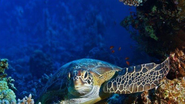 Как прекрасен подводный мир.