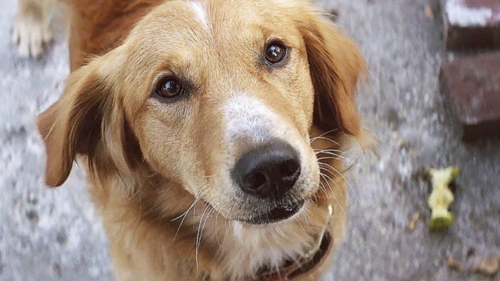 Собачья жизнь / A Dog's Purpose (2017) США