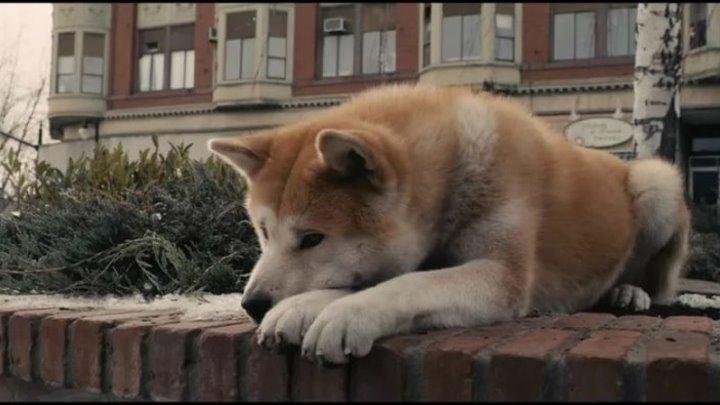 Хатико: Самый верный друг . Драма, Семейный