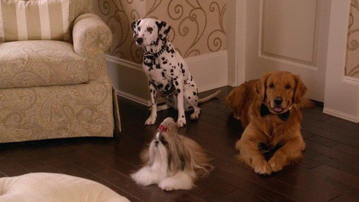 """""""Собаки моих бывших"""" My Boyfriends' Dogs. Комедия, Семейный."""