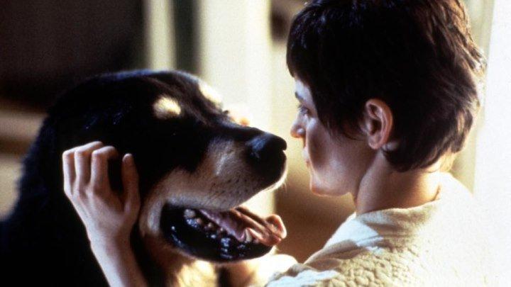 Лучший друг человека (1993 ᴴᴰ) 16+ Ужасы, Фантастика, Триллер, Комедия