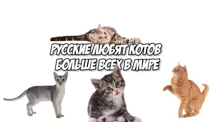 Россияне любят котов больше всех в мире