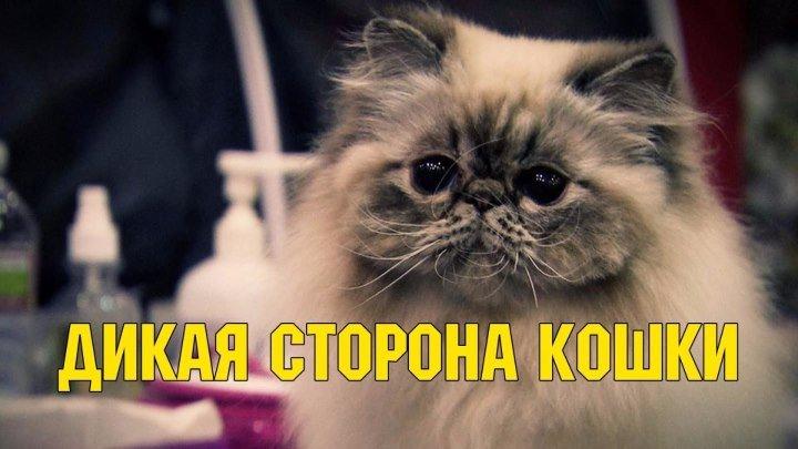 Дикая сторона кошки