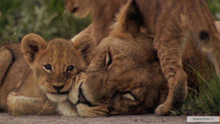 Последние львы . документальный