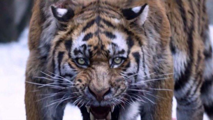 Великий тигр _ Daeho _ The Tiger (2015) - HDRip