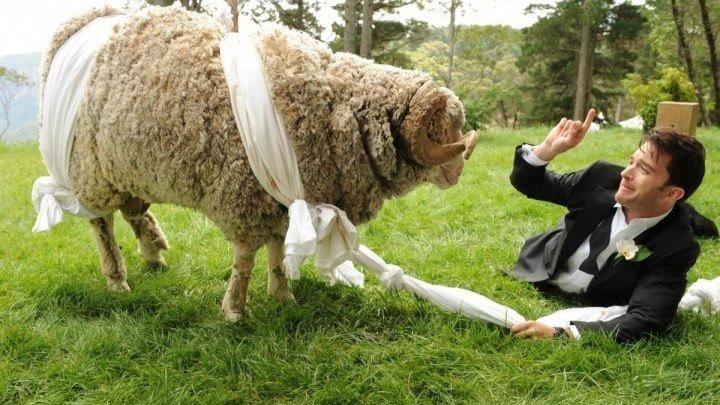 Свадебный разгром. Комедия