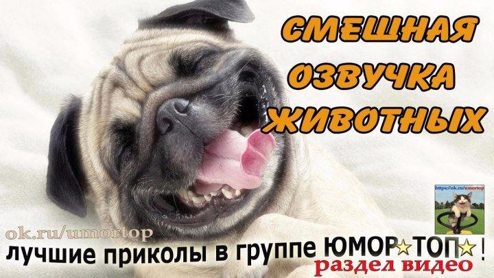 Смешная озвучка животных !😃
