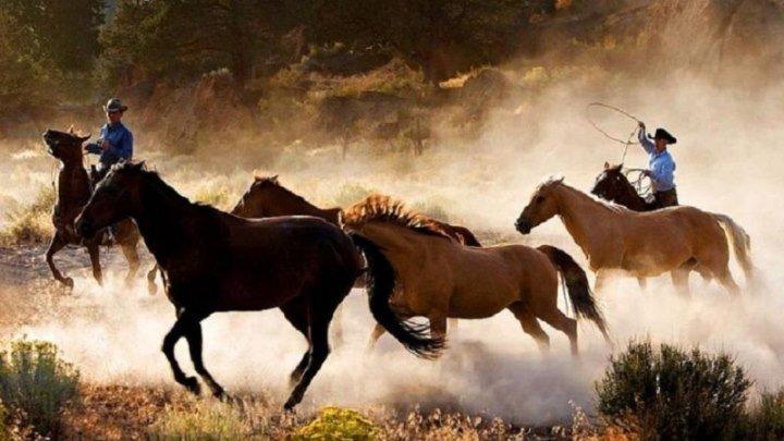 Фильмы о лошадях. Одичавший (бегущие на волю) фильм 2017