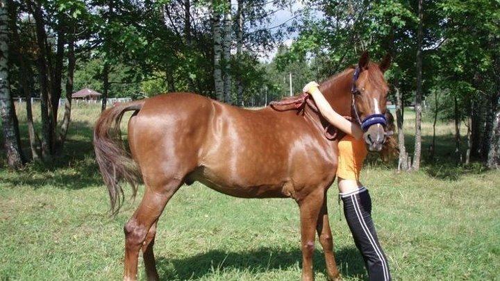 Фильмы о лошадях. Большой риск (2004)