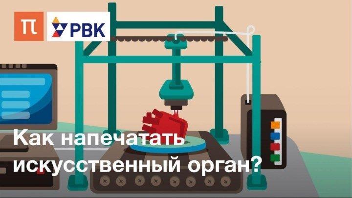 Как напечатать орган на биопринтере?