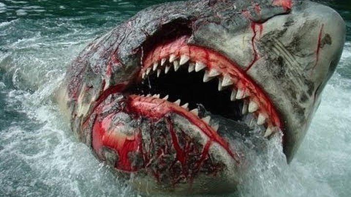Акула в Венеции 2008: Ужасы