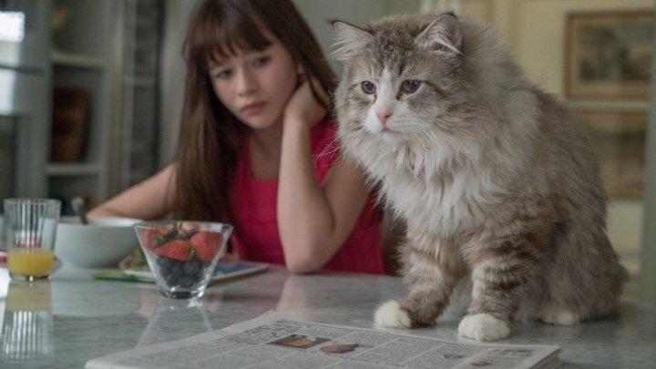Девять жизней (2016) Комедия, Фэнтези, Семейный. Страна: Франция, Китай.