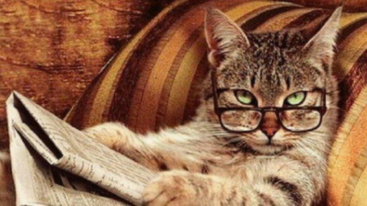 Умные коты! ( Сообразительные малые )