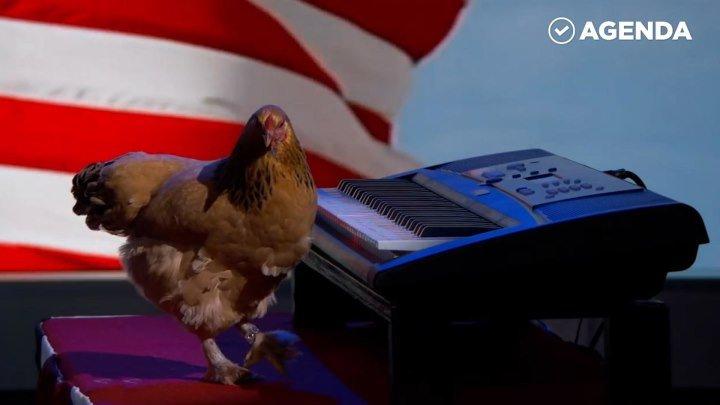 Курица-пианистка