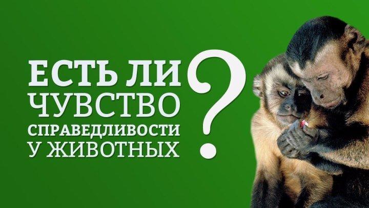 Есть ли чувство справедливости у животных?   IQ