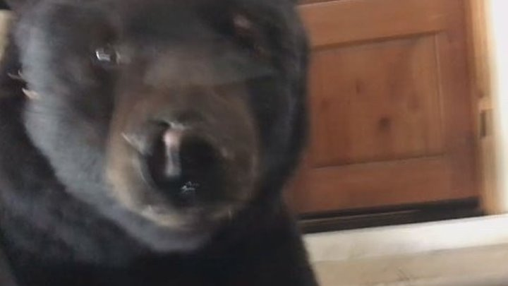 Американка нос к носу столкнулась у себя в гараже с медведем
