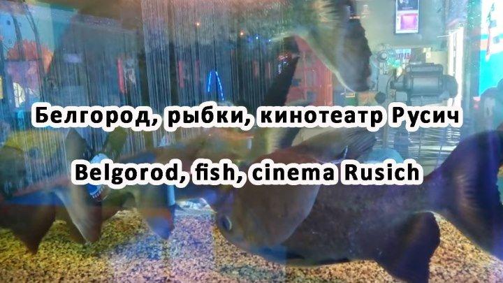 Белгород, рыбки, кинотеатр Русич Belgorod, fish, cinema Rusich
