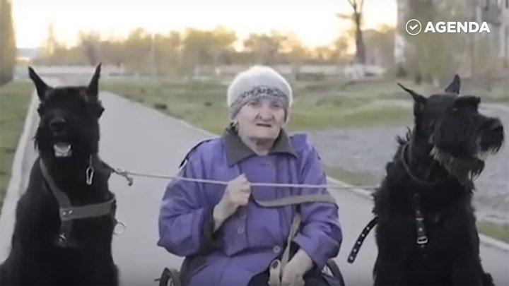 Старушка ездит на собаках