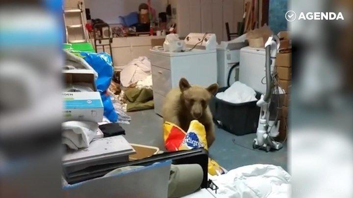 Медведь забрался в гараж