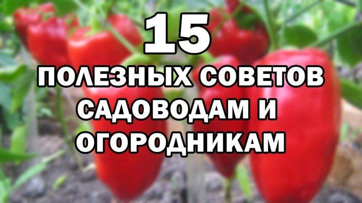 15 Полезных советов от Урожайной Грядки (часть 1)