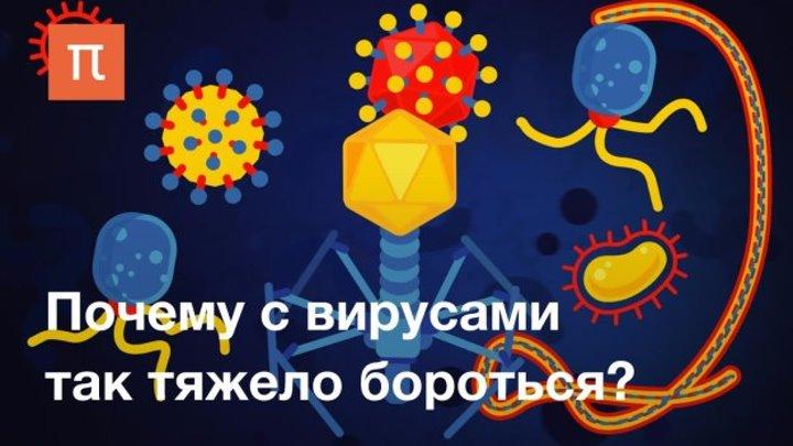 Вирусы: виды, устройство и способы заражения клетки
