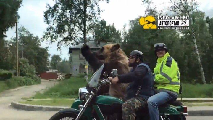 Байкеры в Архангельске прокатили на мотоцикле медведя