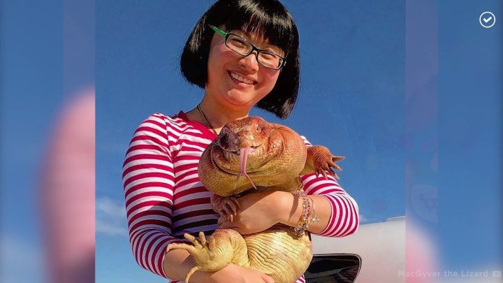 Домашняя ящерица любит обнимашки
