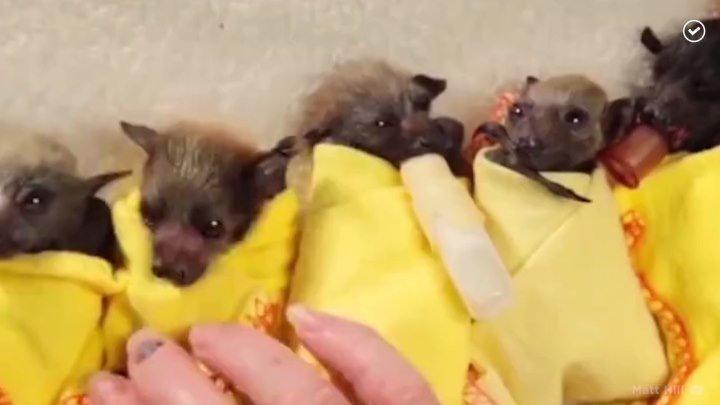Одеялки для летучих мышат