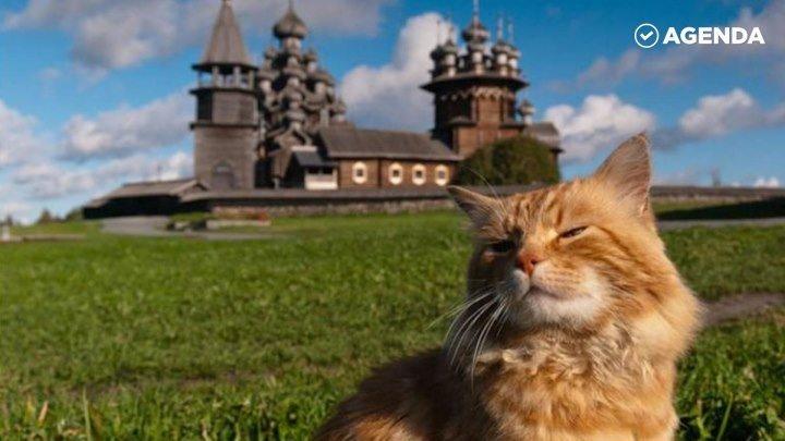 Кот-смотритель Кеша, уже 15 лет охраняет Кижи