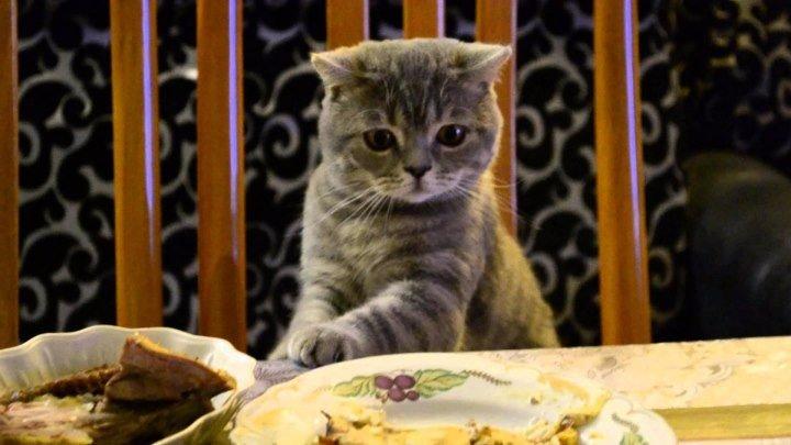 Кот ворует черный хлеб, прикол