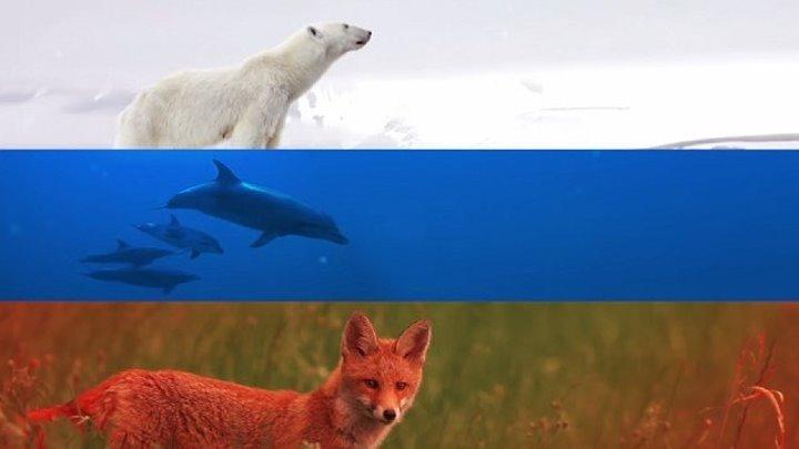 Три цвета одной страны
