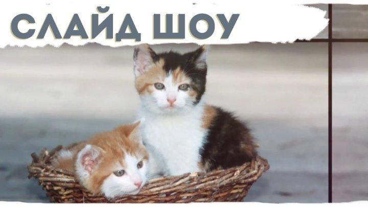 Слайд шоу вы и ваши домашние животные. Для детей. Слайд шоу с котятами. Слайд шоу для кошки, собаки / и тд.