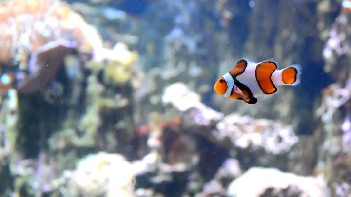 Москвариум. Подводный мир
