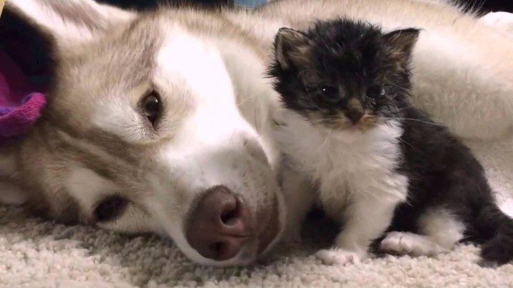 Кошка, которая считает себя собакой.