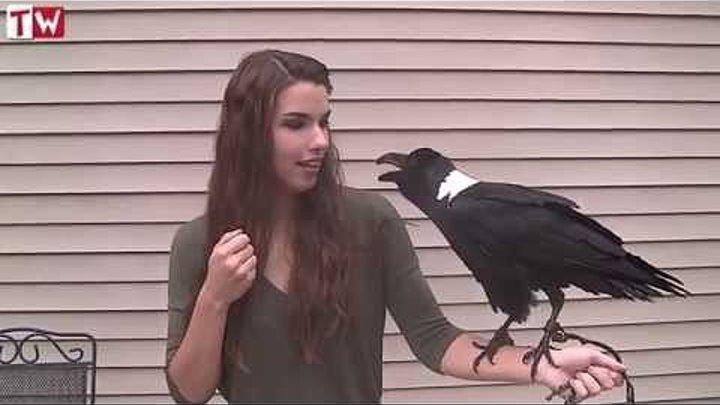 Говорящий Ворон общается с весёлой девушкой