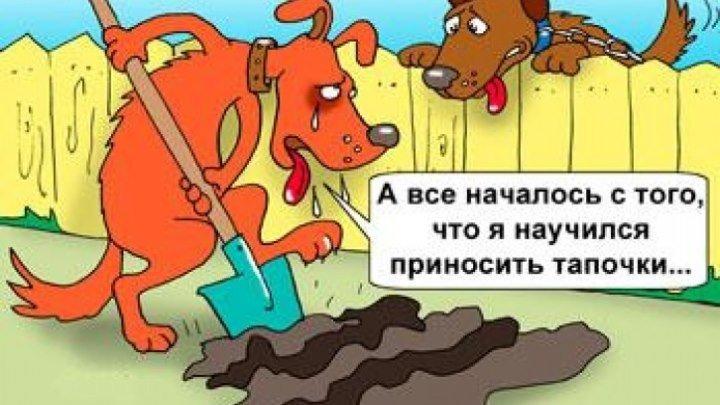 Самый главный огородник - помощник )