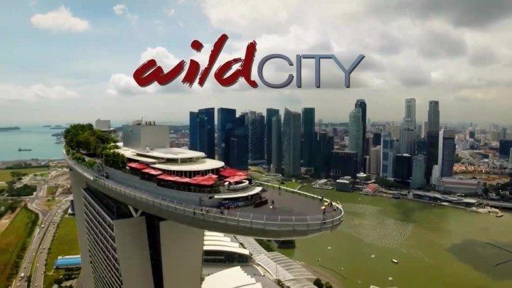 Дикий город 01_Hidden Wild