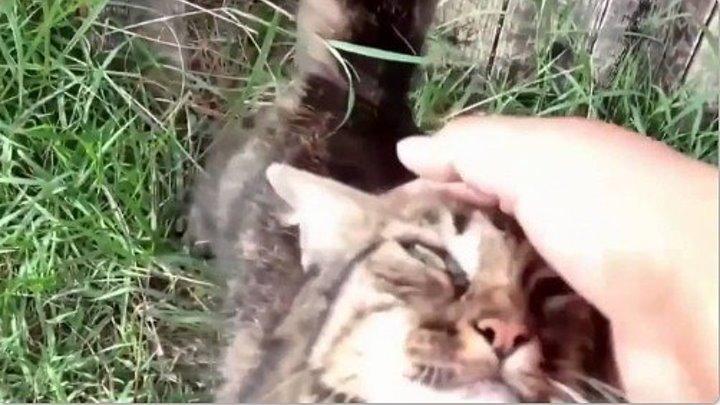 Как кошки встречают своих хозяев
