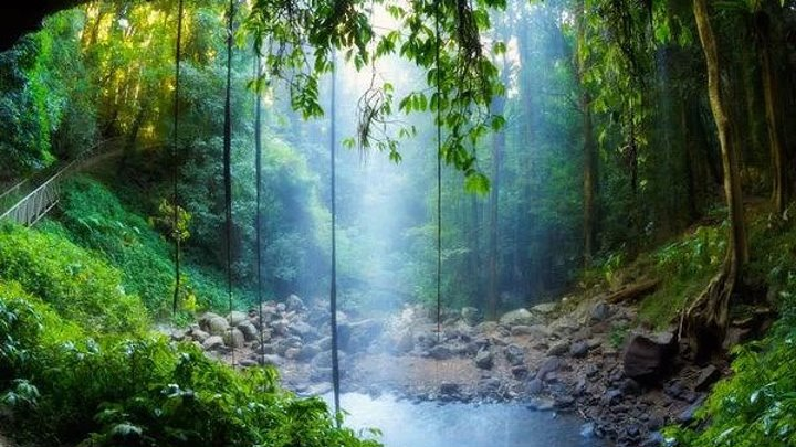 NG: Скрытый мир Амазонки (2016) Документальный,