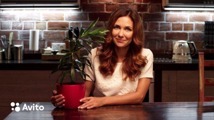 Екатерина Климова продаёт на Avito... домашнюю пальму