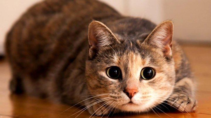 Территория Призраков - О кошках
