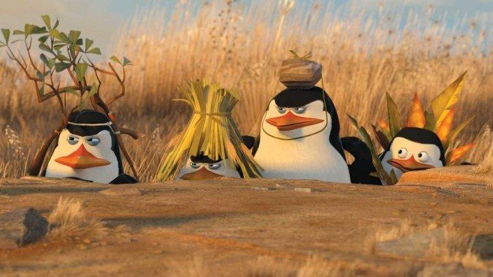 Пингвины Мадагаскара