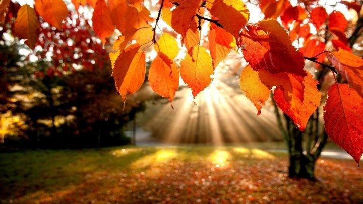 Эрик Клэптон. Осенние листья