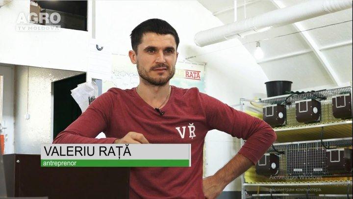 Custile lui Rata la Gospodarii Moldovei (Agro TV Moldova)