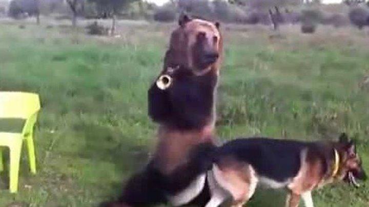 Такого медведя я вижу в первый раз