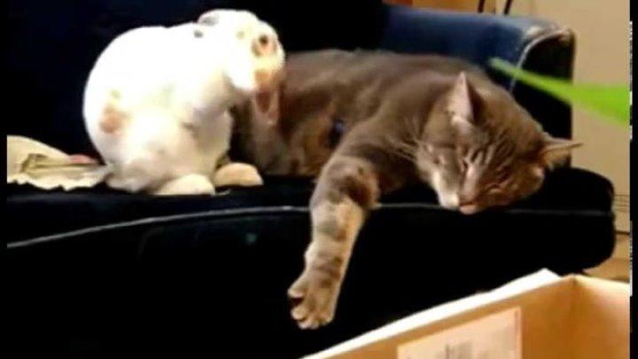 Кролик и Кот прикольно уснул СМОТРЕТЬ ДО КОНЦА