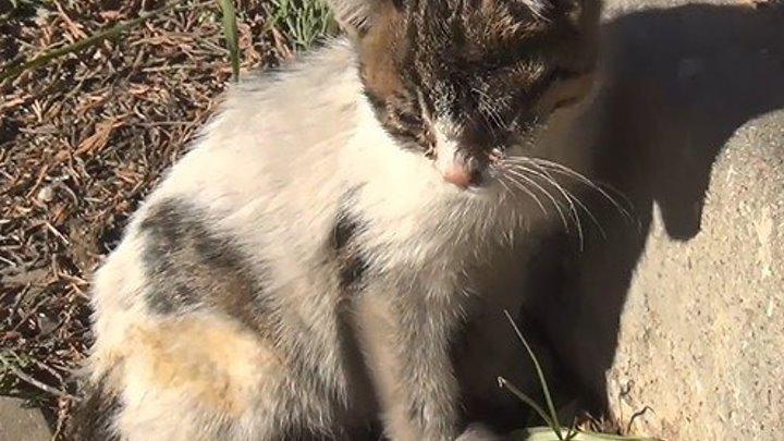 История о том, как грязный котёнок нашёл дом