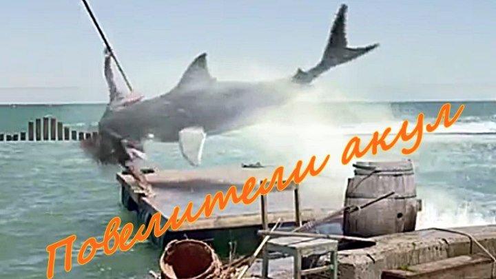 Фильм-фентези «Повелители акул»