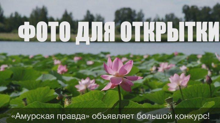 Фото для открытки: конкурс фотографий Приамурья от «Амурской правды»